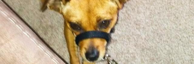 Alexis' service dog.