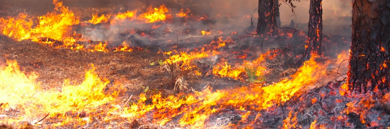A forest fire creeping along the ground.