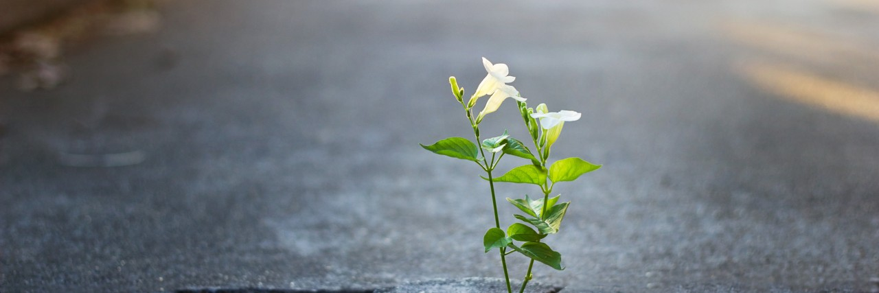 white flower growing on crack street, soft focus
