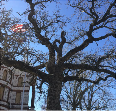 Large tree with American flag flying in the background.