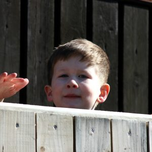 Brody peeking over a fence.