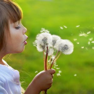 A young girl blowing on dandelions
