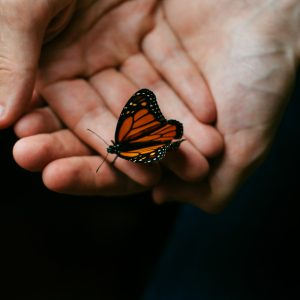 woman's hands holding butterfly with dark background