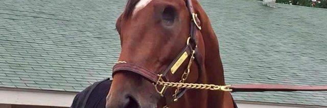 patch horse kentucky derby