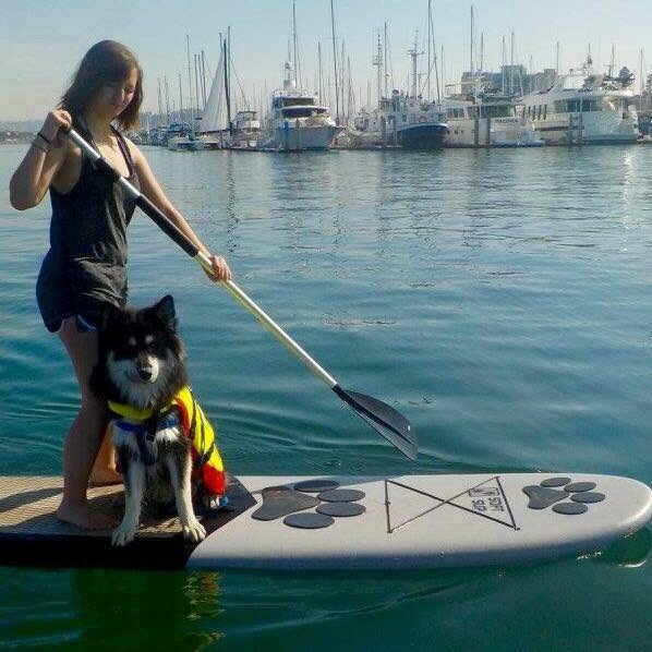 woman and malamute on board paddling in ocean