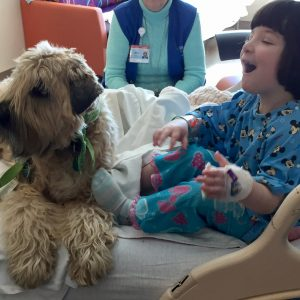 Little girl sitting on hospital bed, smiling and excited to have a brown therapy dog on the bed with her