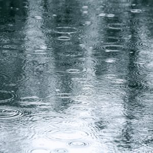 reflection of trees in a puddle with rain falling