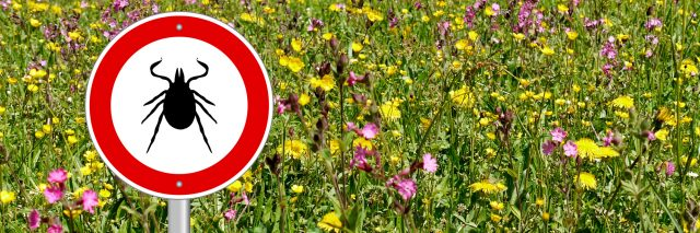 tick sign in a flower meadow