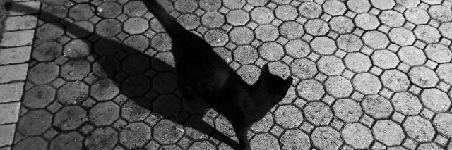 black cat on paved driveway with long shadow