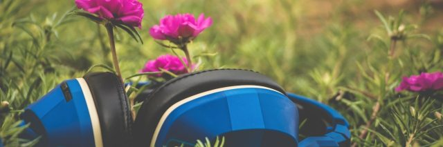 blue headphones resting on grass with small pink flowers