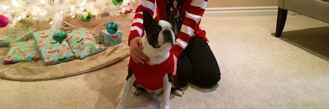 woman posing with her boston terrier in front of a christmas tree