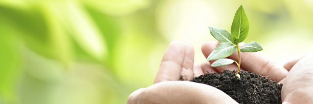 hands holding small green sapling and soil