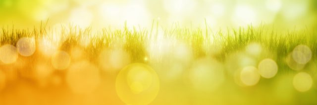 Blurred image of grass and sunlight