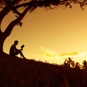 Man reading book under tree in park at sunset