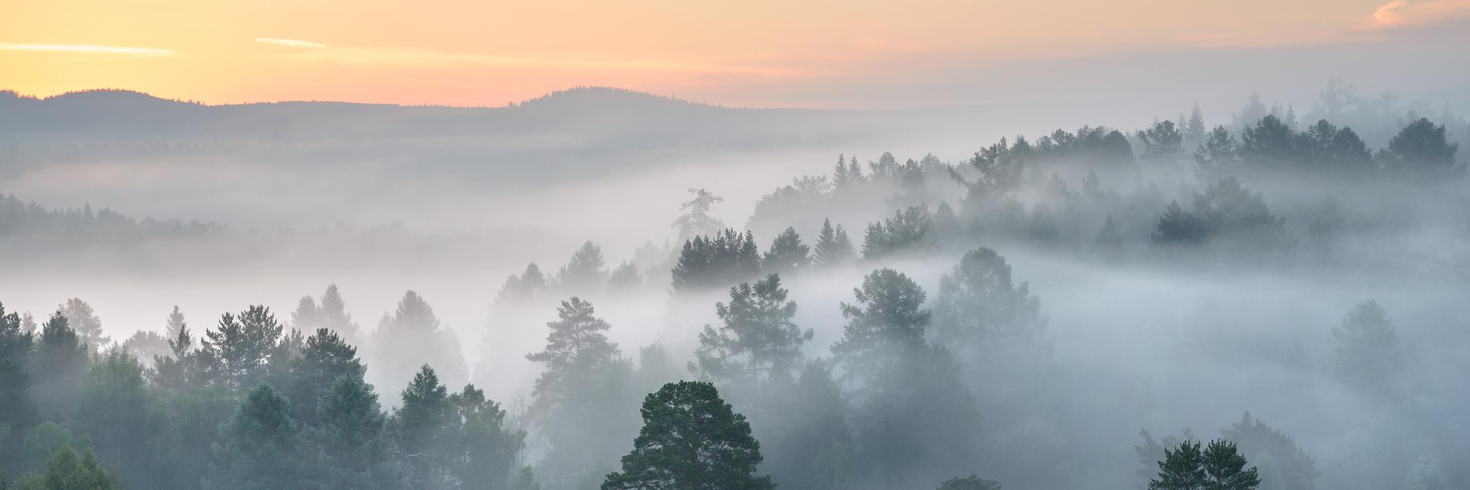 morning fog in forest at sunrise