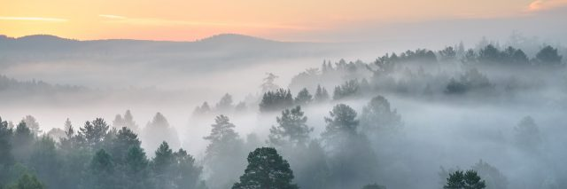 morning fog in forest at sunrise