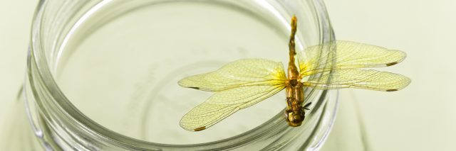 dragonfly perching on the edge of a glass jar