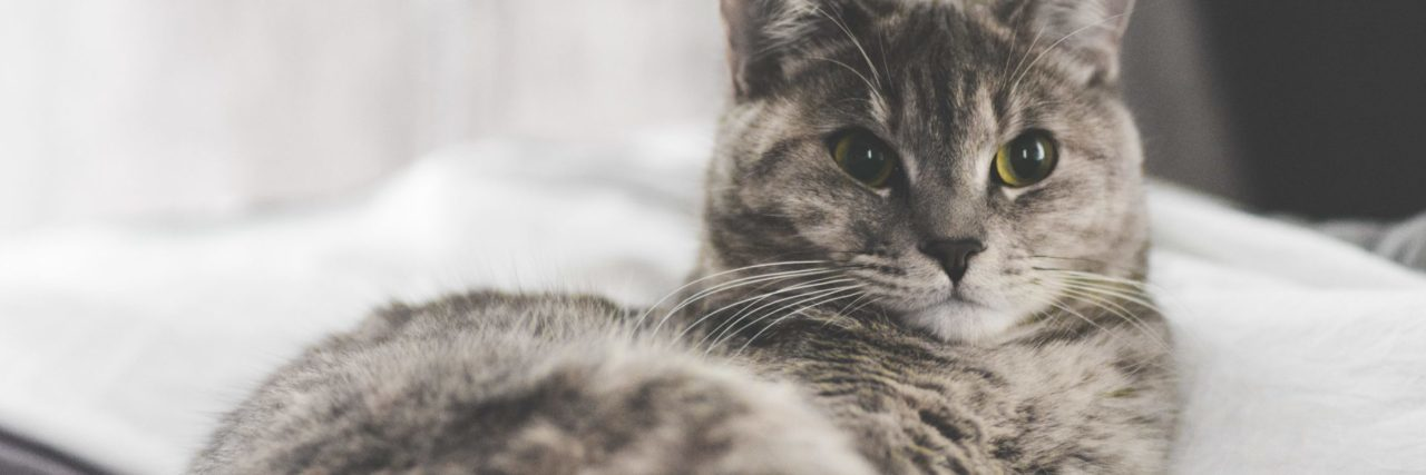 gray and white tabby cat lying on bed