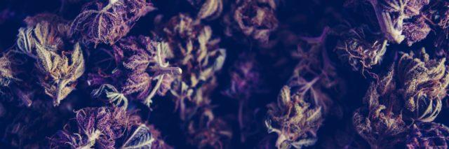 a photo of marijuana