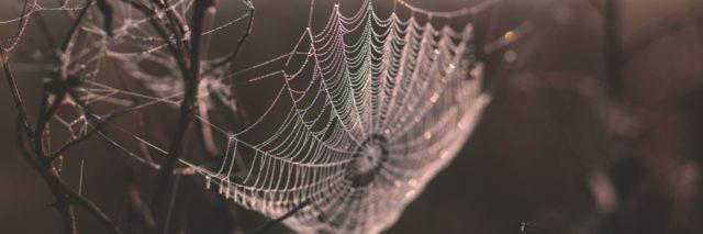 spiderweb in nature