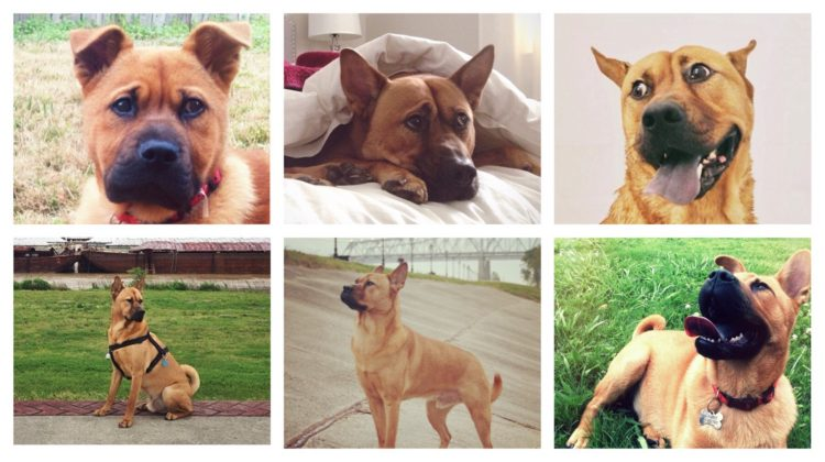 collage of cute dog