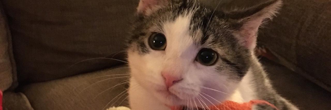 meeko cat