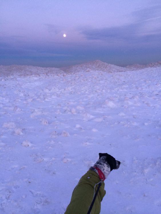 dog sitting next to frozen lake