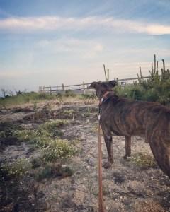 walking a dog near the beach