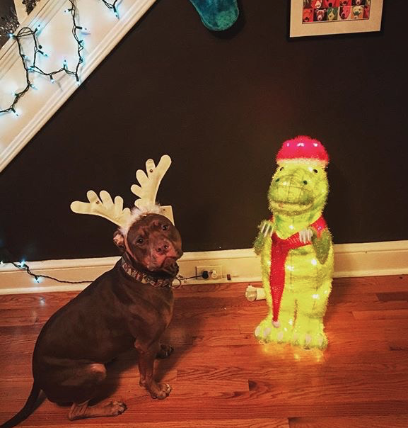 cute dog wearing reindeer horns at Christmas