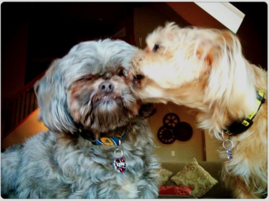 two cute dogs cuddling