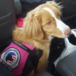 Rose the emotional support dog.