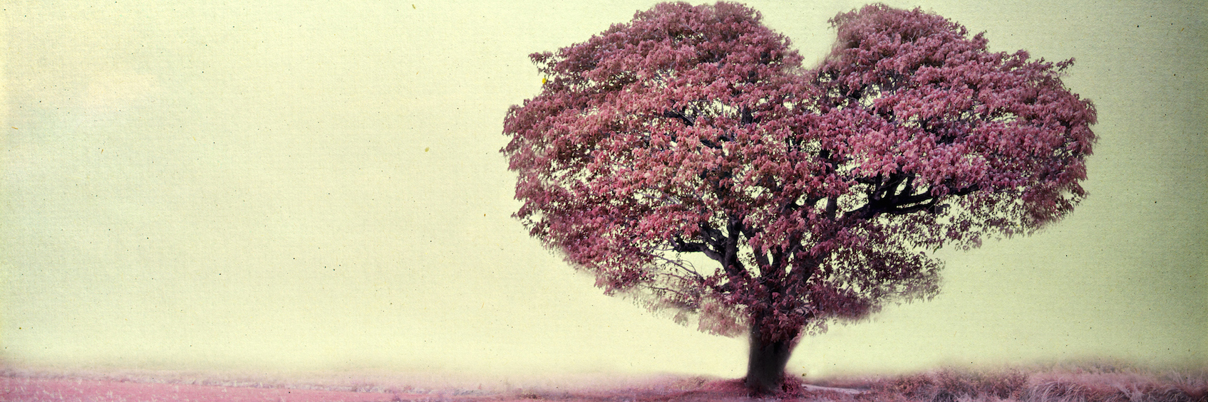 Illustration of pink heart-shaped tree against gray sky background