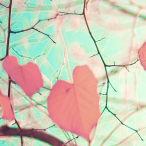 Heart-shaped autumn leaves on tree branches