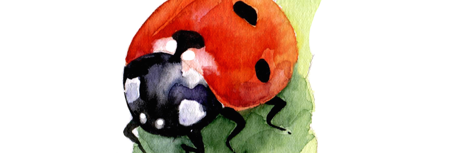 Watercolor isolated hand drawn ladybug on leaf. Spring. Insect.