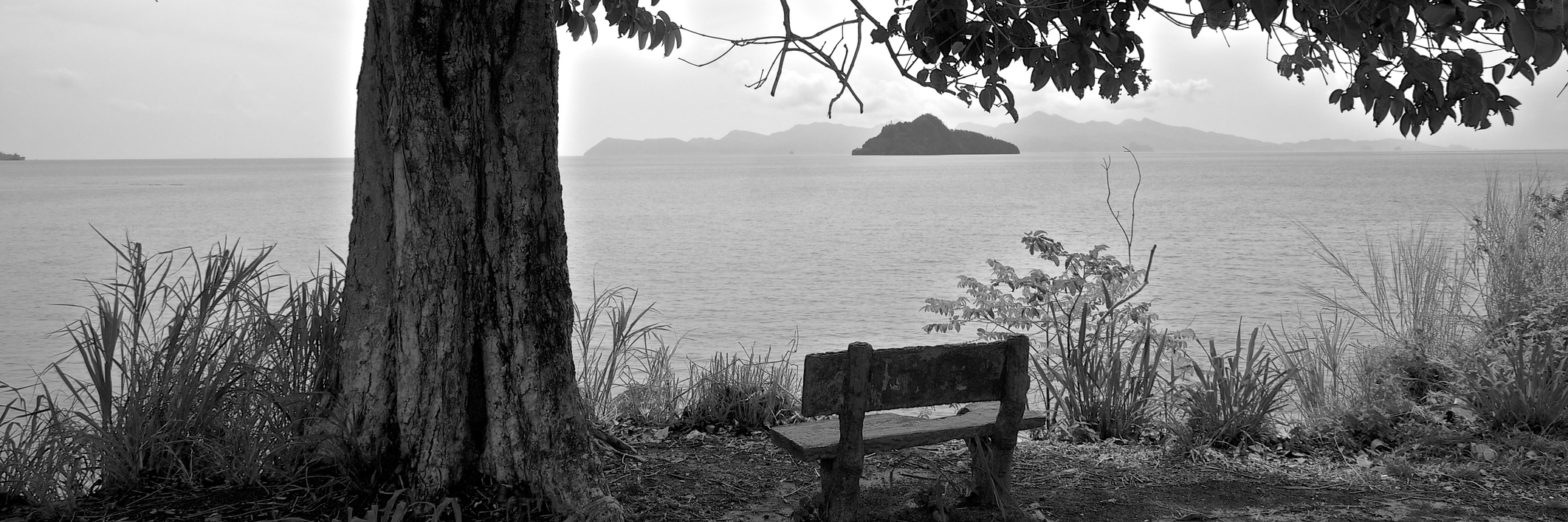 Bench under a tree by a lake, black-and-white photo.