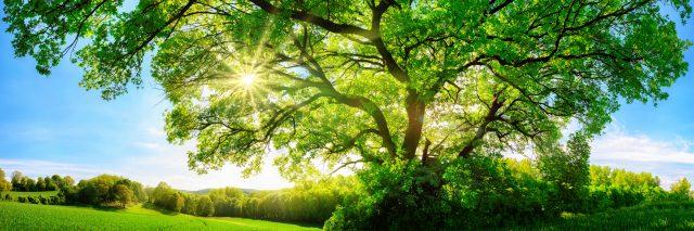 sun shining through the tress in a field