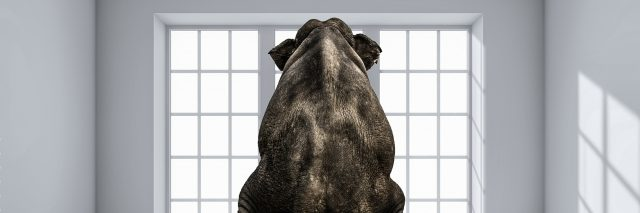 An elephant sitting on a chair, in the middle of the room.