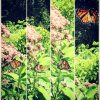 butterfly sitting on flowers then spreading its wings and flying