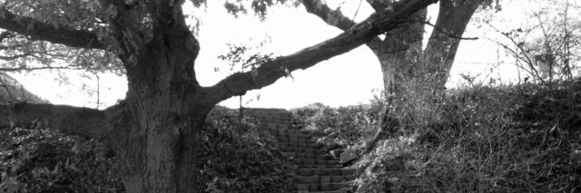 Black-and-white image of steps between trees in a park.