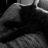 black and white image of contributor's cat lying on bed