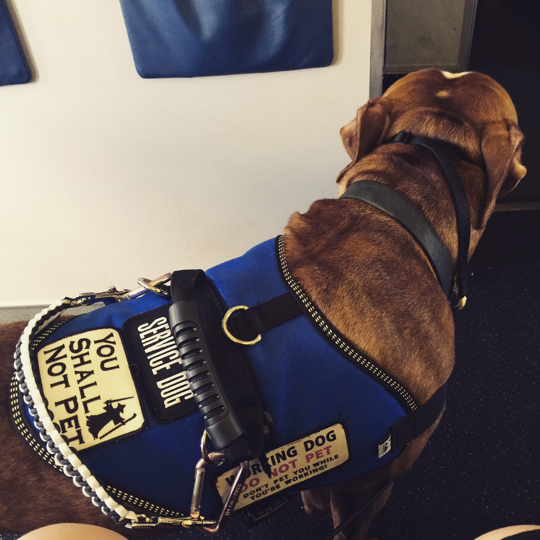 """Vinnie's vest with a patch reading """"You Shall Not Pet."""""""