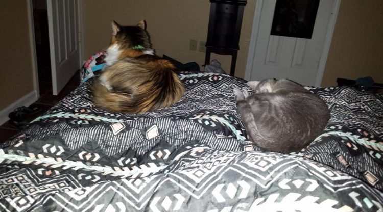 cats sitting on the end of the bed