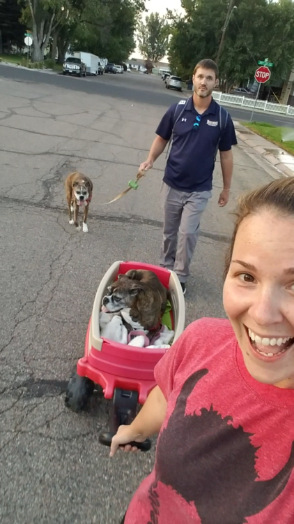 Andrea Cummings and dogs