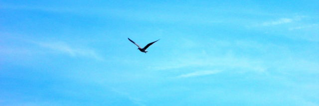 bird flying against a blue sky
