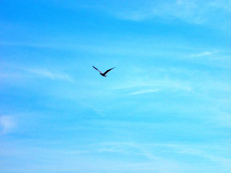 bird flying against a blue sky