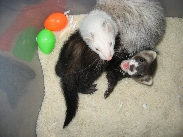 My little ferrets often help me through the hard times.