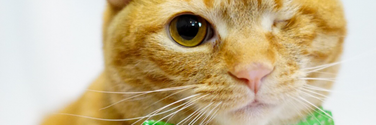 ginger cat with one eye wearing green bow tie
