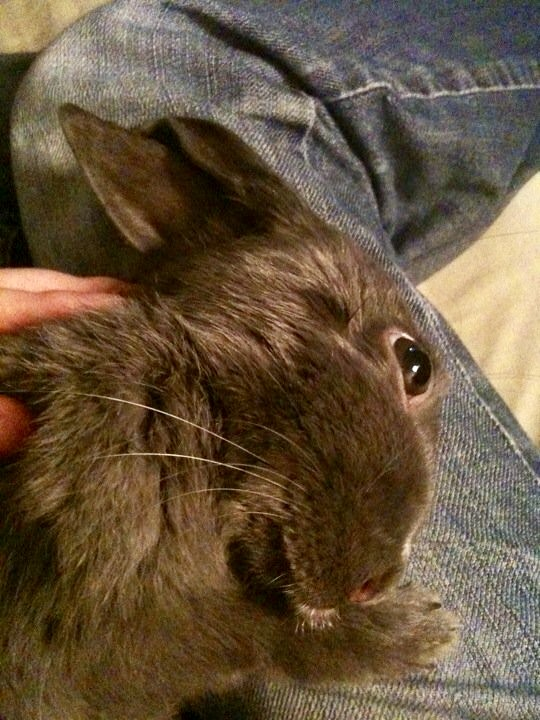 rabbit with head tilt