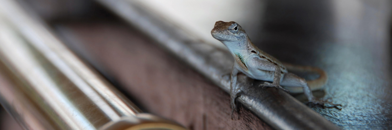 One brown Anole sitting on a Bar.
