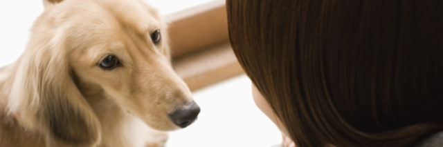 Dog looking into woman's face